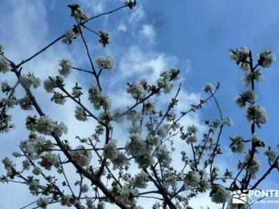 Cerezos flor Jerte; Nogaleas; senderismo con imaginación; hiking;turismo activo madrid